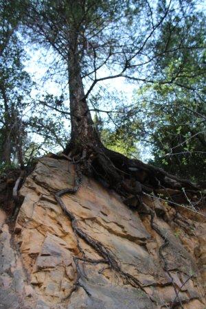 Garlands Oak Creek Lodge: Beautiful nature display.