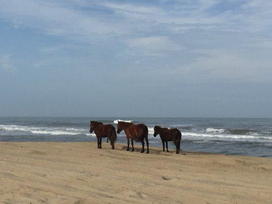 Zdjęcie Carova Beach