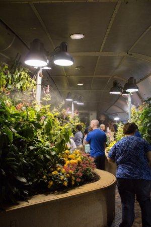 Smithsonian Butterfly Habitat Garden: Butterfly Exhibit