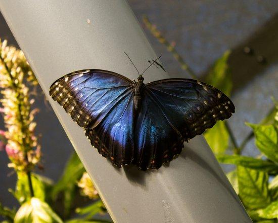 Smithsonian Butterfly Habitat Garden: Butterfly