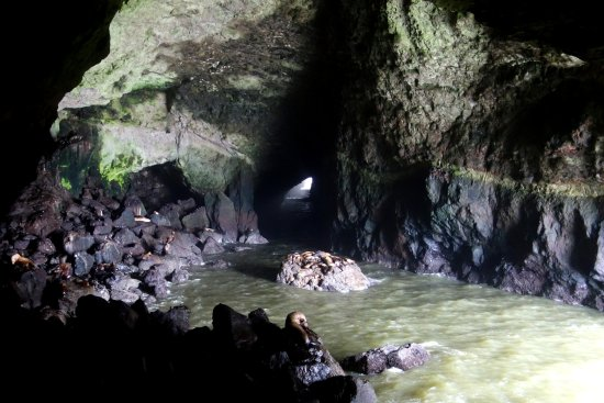 Florence, OR: Sea Lion Caves