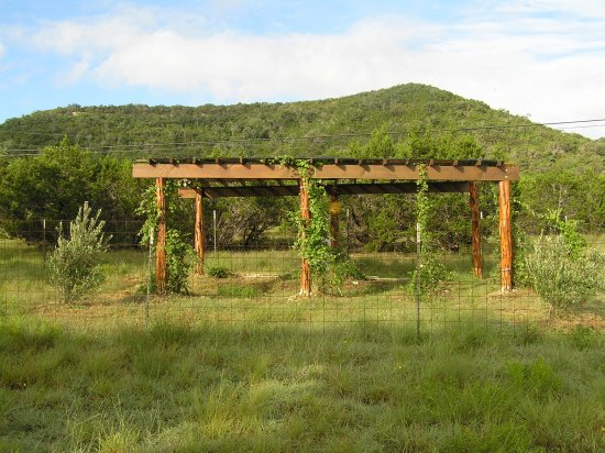 Tarpley, TX: Our grape arbor - wine in a few years, maybe