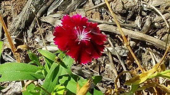 Atenas, GA: Beautiful flowers to enjoy.