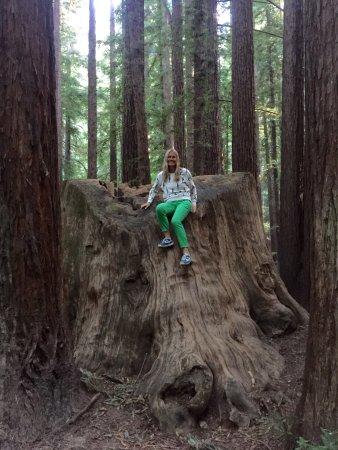 Weott, CA: Burlington Campground at Humboldt Redwoods State Park - Site 27