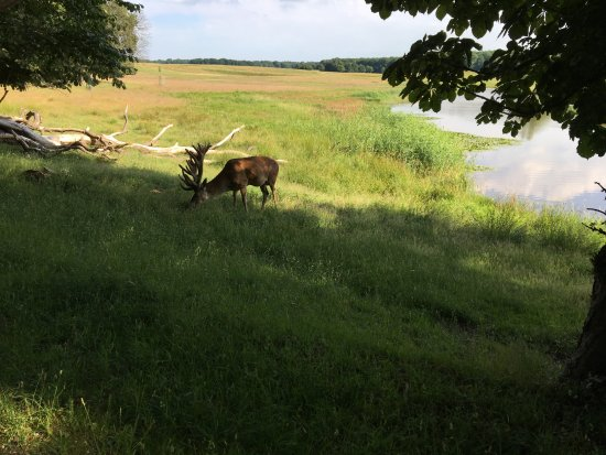 Lyngby, Dinamarca: Just before reaching the restaurant, we were rewarded with such a view!