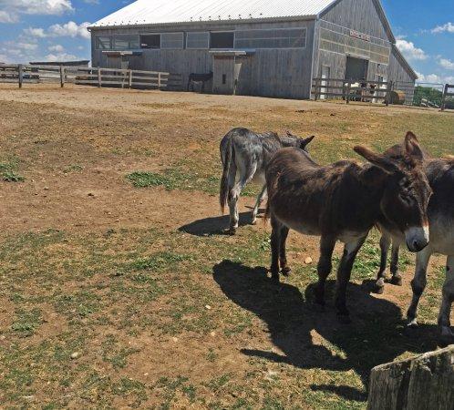 Donkey Sanctuary of Canada: Near the entrance