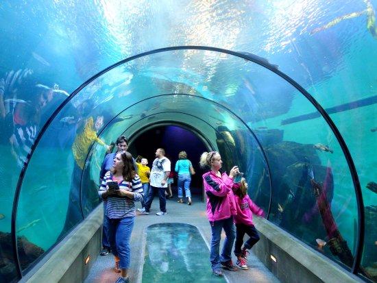 Oregon Coast Aquarium Shark Tunnel