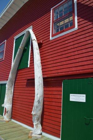 ลือเนนบูร์ก, แคนาดา: WHALE JAW BONE