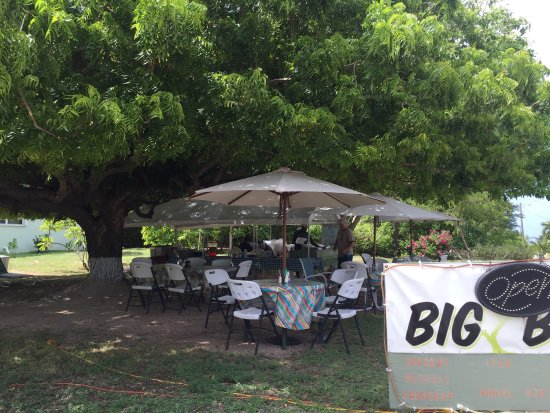 Gun Bay, Gran Caimán: Nice big tree that provides good shade while eating there.