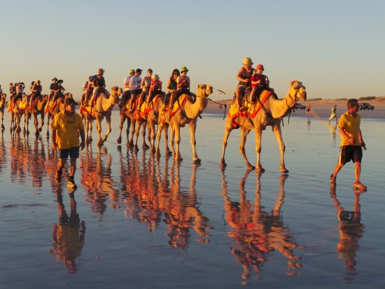 Sundowner Camel Tours