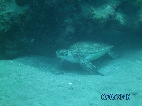 Windwardside, Isla de Saba: We saw lots of turtles, sharks, sting rays and a variety of fish.