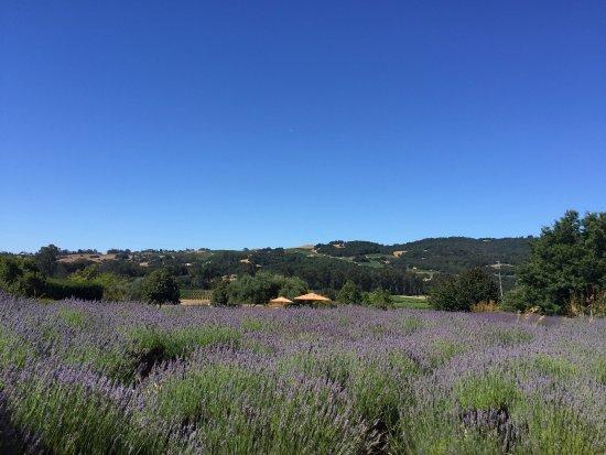 Matanzas Creek Winery: photo3.jpg