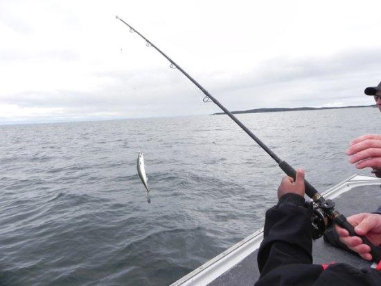 Port Hood, Canadá: mackerel!