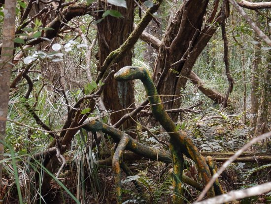 Smithton, Australia: Artwork in disguise in the forest ?