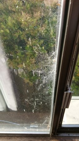Gold Beach, OR: Spider webs on the outside of the window. And this wasn't the only ones!
