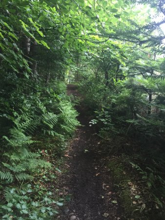 North Ballachulish, UK: A well-treed trail just from the hotel.....a lovely long walk.