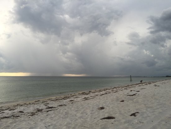 Boca Grande, FL: Had a walk up the beach this evening. It's a long stretch, quite pretty. A fair bit of seaweed a