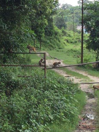 Gokarna Forest Resort: photo5.jpg
