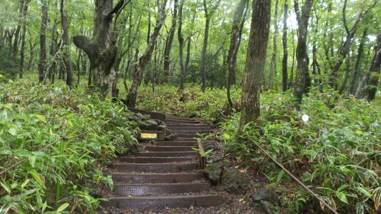 Hallasan National Park: You need a little fitness to do the trekking.