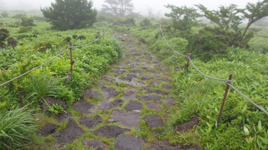 Hallasan National Park: It was a rainy and foggy day.