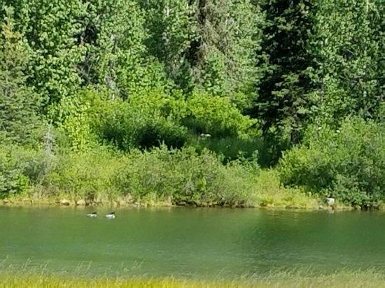 Moose Pass, AK: 20160712_165113_large.jpg