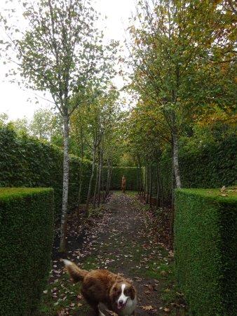 Sutton Forest