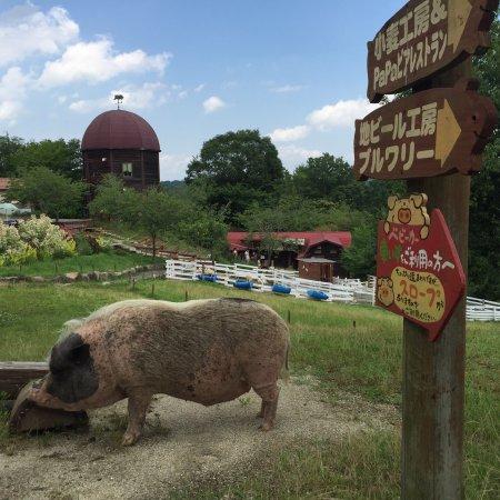 Moku Moku Farm