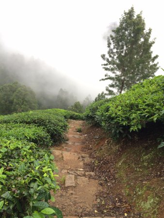 One of the best resort/hotel to relax in Munnar