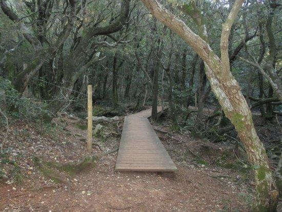 Les Sources de l'Huveaune: Pour passer de l'autre cote il faut emprunter ce pont et guet sur l'huveaune