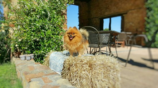 Guasticce, Italia: Fotor_146640967810997_large.jpg