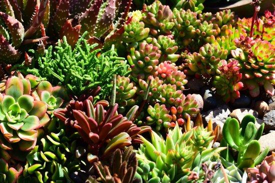 Carlsbad Flower Fields: Succulent garden