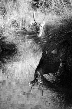 Foto de Welgevonden Game Reserve