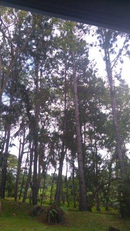 Davao City, Filippine: Nice forest
