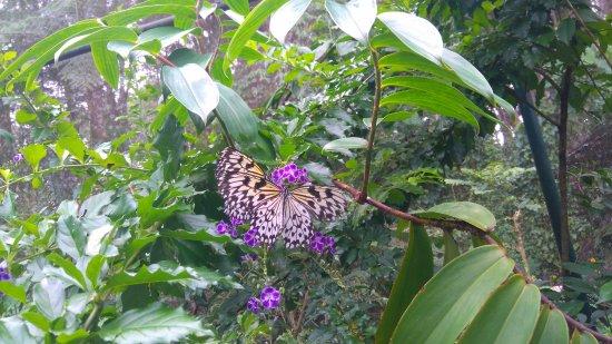 Davao City, Filipinler: Butterfly garden
