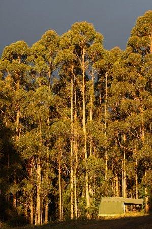 Lunawanna, Αυστραλία: Tent at Sunset
