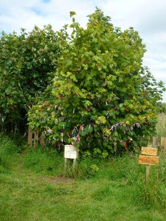 Dirleton, UK: The Wishing Tree