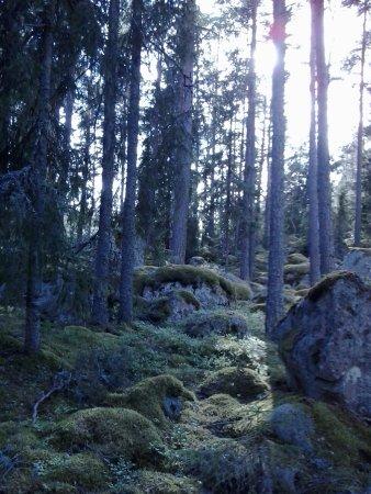 Skinnskatteberg, Σουηδία: Fairy-tale woods