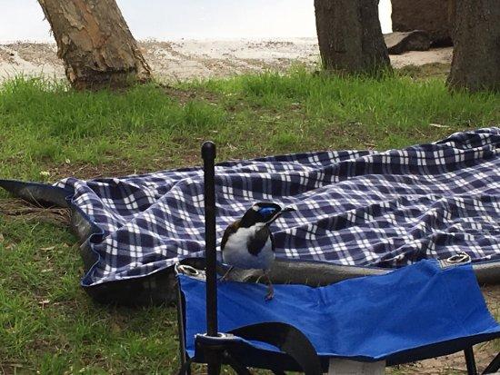 Wooli, Avustralya: photo3.jpg