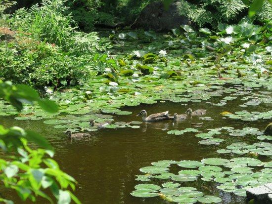 Atsumi Onsen : たちばなやの池(その3)