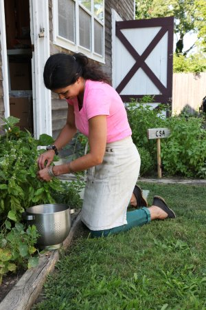 East Marion, Nova York: Lucy in herb garden