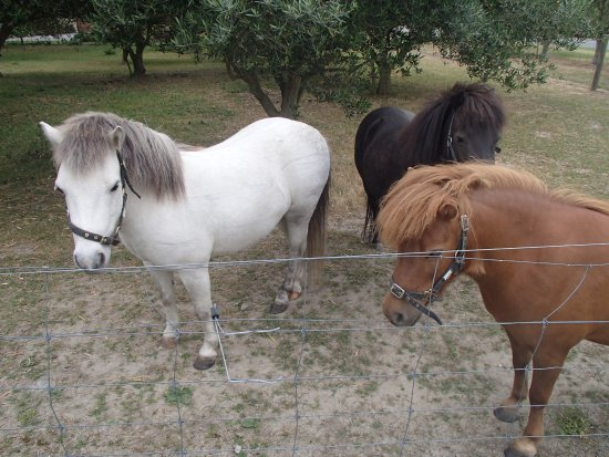 Renwick, Nieuw-Zeeland: The adorable little ponies who would come and say good morning every day!