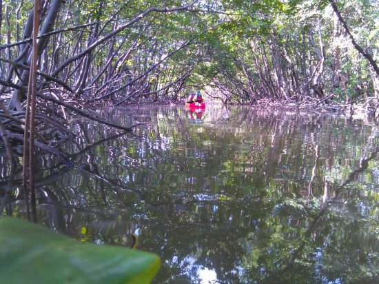 Kayak Marco: 2.5 hour kayaking tour