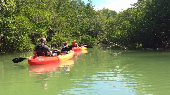 Kayak Marco : 2.5 hour kayaking tour