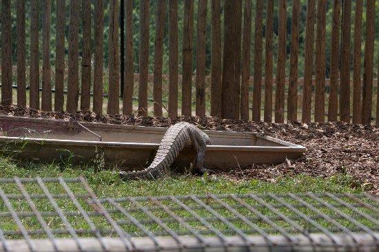 Dahlonega, GA: Gator desperately trying to get to some water.