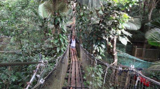 Bouillante, Guadeloupe: dans la canopée