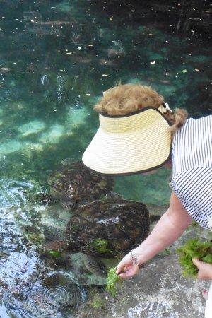 Essque Zalu Zanzibar: hand feeding the turtles at rehab centre. snockelling and swimming options  available . 5 min  w