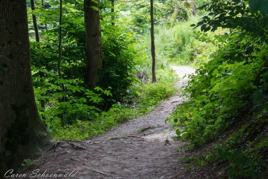 Heiden, Schweiz: malerischer Waldweg