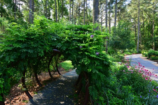Find Your Escape At Cape Fear Botanical Garden