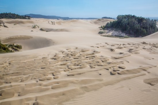 Florence, Oregón: the dunes at Honeyman