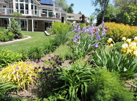 Kingsville, Kanada: The Garden in full bloom